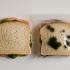 lunch_bag_5.jpg