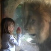 Adorable Girl Laughs… As Lion Tries To Eat Her