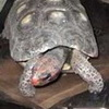 Pet Tortoise Survives In Storage For Thirty Years