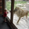Little Kid vs Lion
