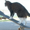 Check out This Skateboading, Parkouring, Stunt Cat!