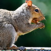 Prince Charles Is Fighting Invasive Squirrels With Nutella