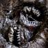 creepy_cheshire_cat_5.jpg