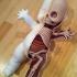jason_freeny_anatomica_kewpie_19.jpg