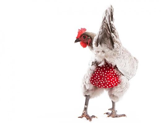 Red-Chicken-Diaper.jpg