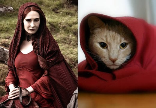 game-of-cats-1.jpg
