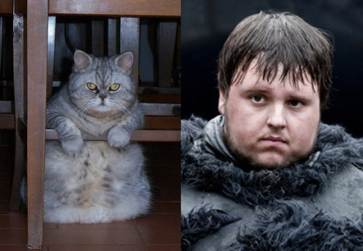 game-of-cats-2.jpg