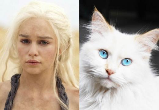 game-of-cats-5.jpg