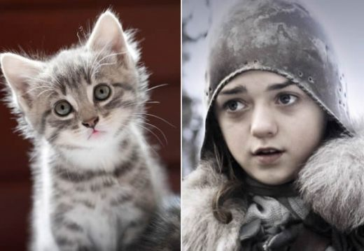 game-of-cats-6.jpg