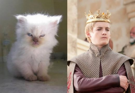 game-of-cats-7.jpg