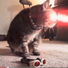 Move Over Jedi Kitty, Here Comes Cyclops Cat