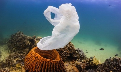 Plastic-Pollution-Coral-Reef-feat.jpg