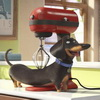New Trailer Released for The Secret Life of Pets