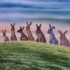 Watership Down Coming to BBC/Netflix With John Boyega and Nicholas Hoult
