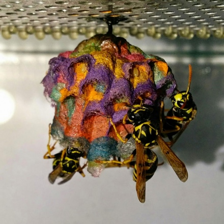 wasp-rainbow-nest-1.jpg