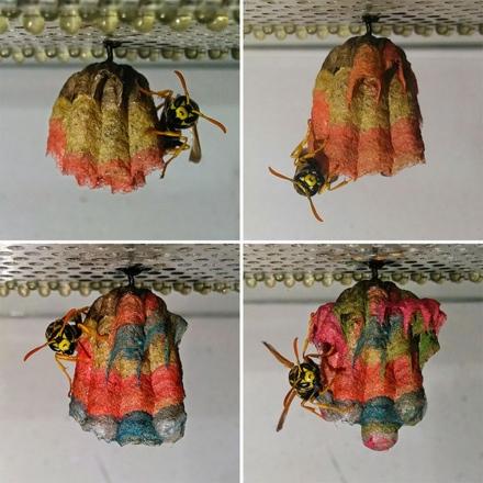 wasp-rainbow-nest-2.jpg