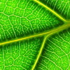 "Is ""Reverse Photosynthesis"" The Key to Clean Energy?"