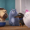 New 'Secret Life Of Pets 2′ Trailer Released