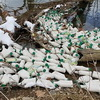 8,000+ Bottles Of Ranch Dressing Spill Into River