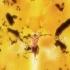 madhouse_xmen_anime_episode_1_screencaps_2.jpg
