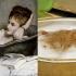 cats_imitating_art_1.jpg