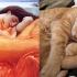 cats_imitating_art_12.jpg