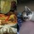 cats_imitating_art_17.jpg