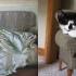 cats_imitating_art_6.jpg
