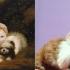 cats_imitating_art_7.jpg