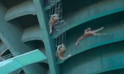 high diving girraffes_feat.jpg