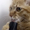 One Cat's Creepy Love Affair With A Vacuum
