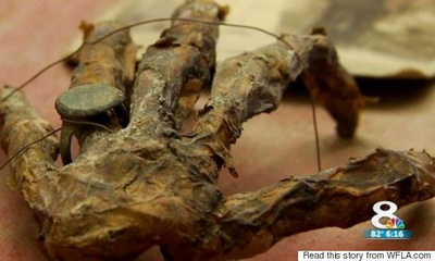 What's Hot: Mummified Hand, Treasure Map Found in Florida Attic