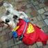 919622-superhero-costume.jpg