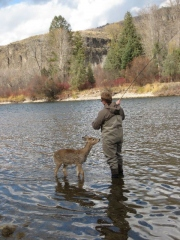 fisherman_meets_deer_1.jpg