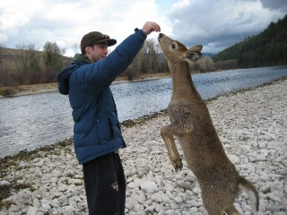 fisherman_meets_deer_4.jpg