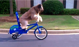 dog_rides_bike_feat.jpg