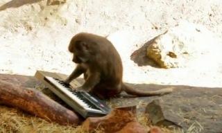monkeys_v__synth_feat.jpg