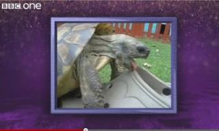 turtle_shoe_sex_feat.jpg