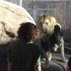 Dumb Ass Makes Me Wish This Lion Would Break The Glass