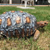 Burn Victim Tortoise Gets 3D Printed Shell
