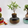 Avatar's Floating Islands Come To Life With Levitating Plants