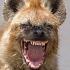 funny_animals_14.jpg