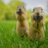 funny_animals_15.jpg