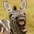 funny_animals_17.jpg