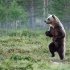 funny_animals_30.jpg