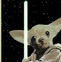 star_wars-dogs_2.jpg