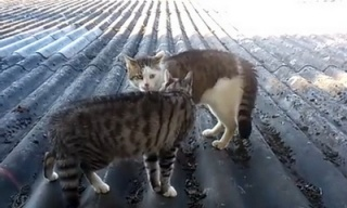 cat-standoff_feat.jpg