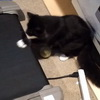Cute Cat Treadmill Fail