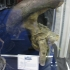 sdcc2011_prop-replica-001.jpg
