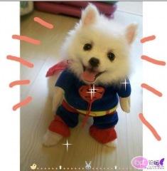 dog-cosplay-3.jpg